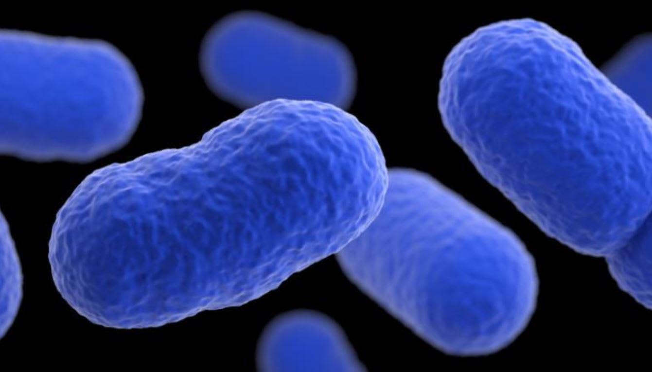 ما هي الليستيريا؟ إليك كل ما تحتاج لمعرفته عن هذه البكتيريا