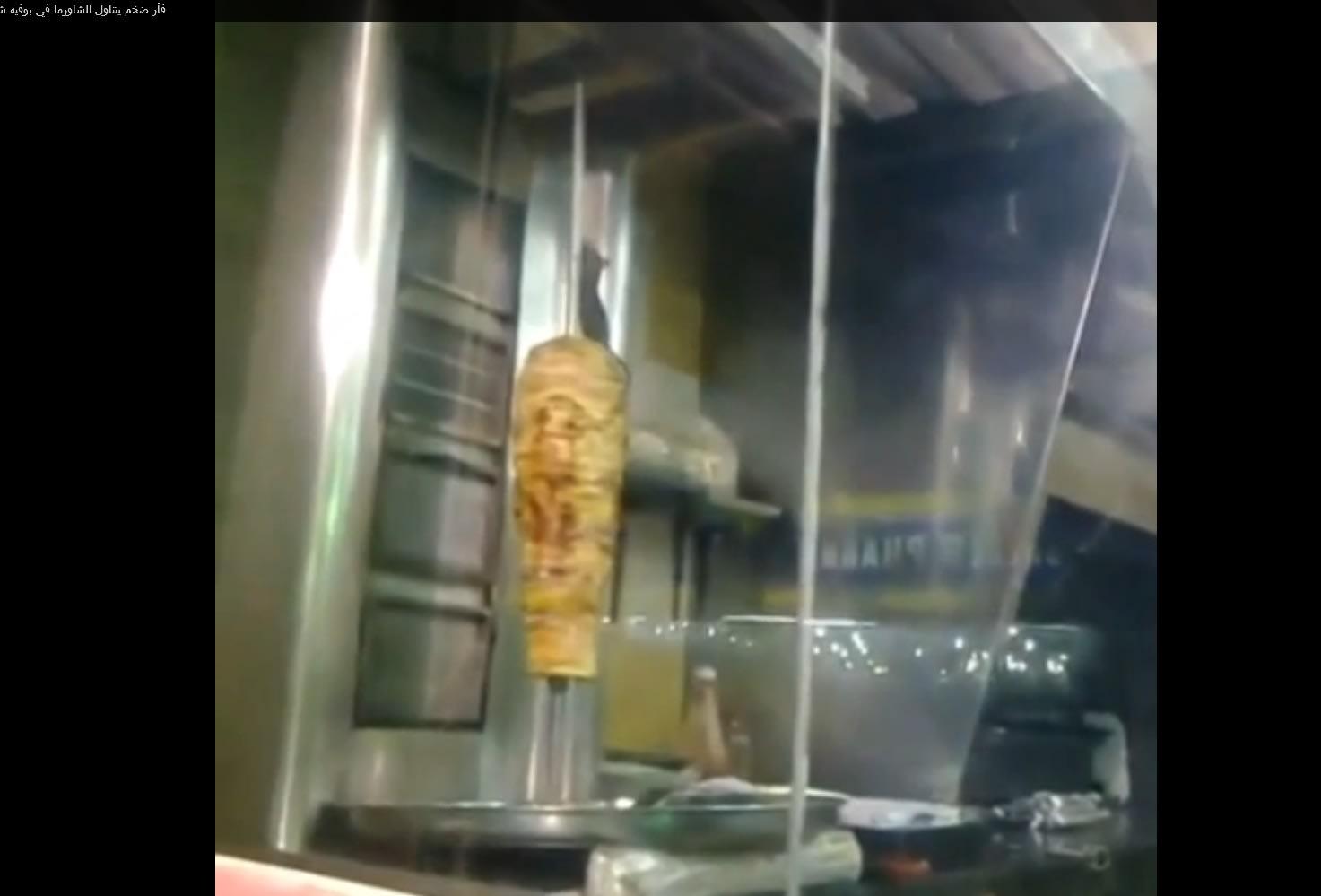 يوتيوب .. فأر يتناول الشاورما في المطعم