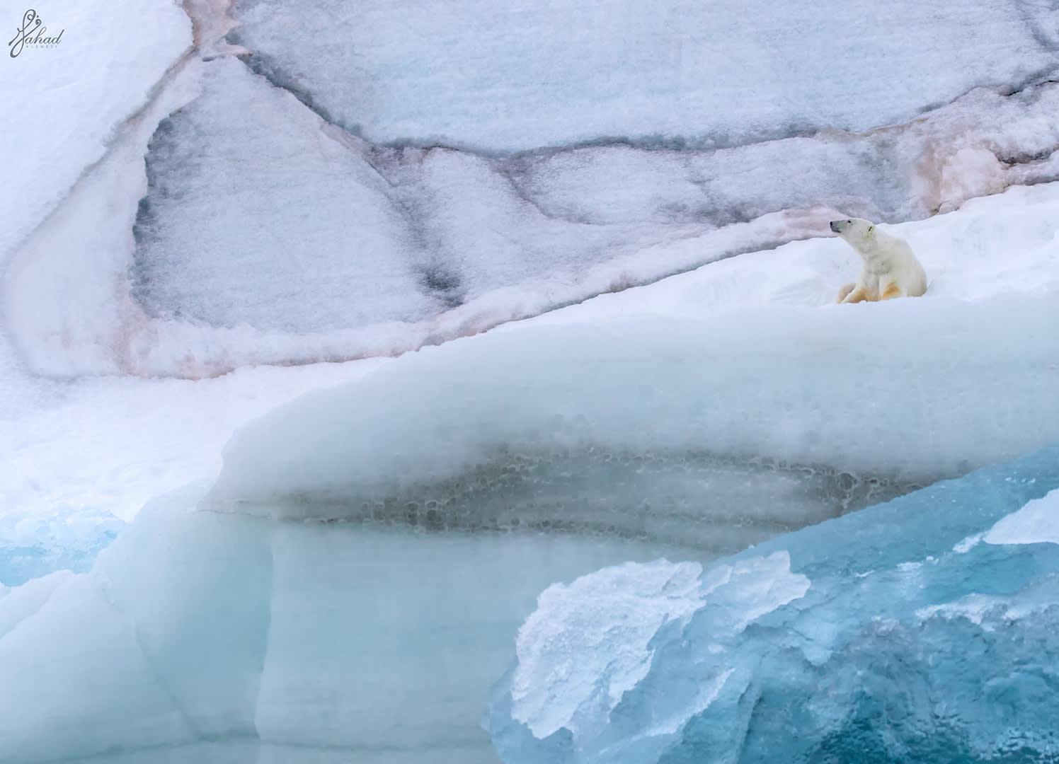 سفالبارد.. مدينة يتجاوز فيها عدد الدببة القطبية عدد السكان