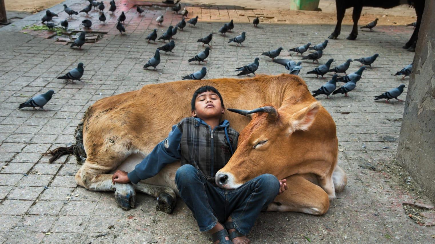 من حرب الخليج الأولى إلى راهب في كمبوديا.. مصور يلتقط العلاقة بين الإنسان والحيوان