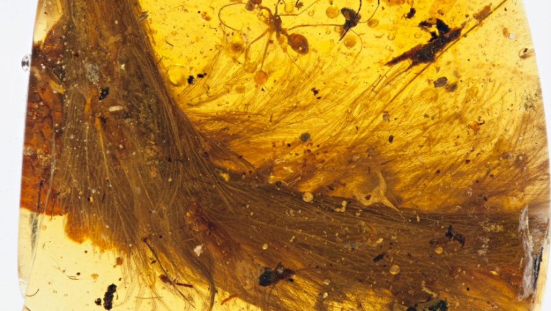 اكتشاف في غاية الندرة: ذيل ديناصور في قطعة من الكهرمان