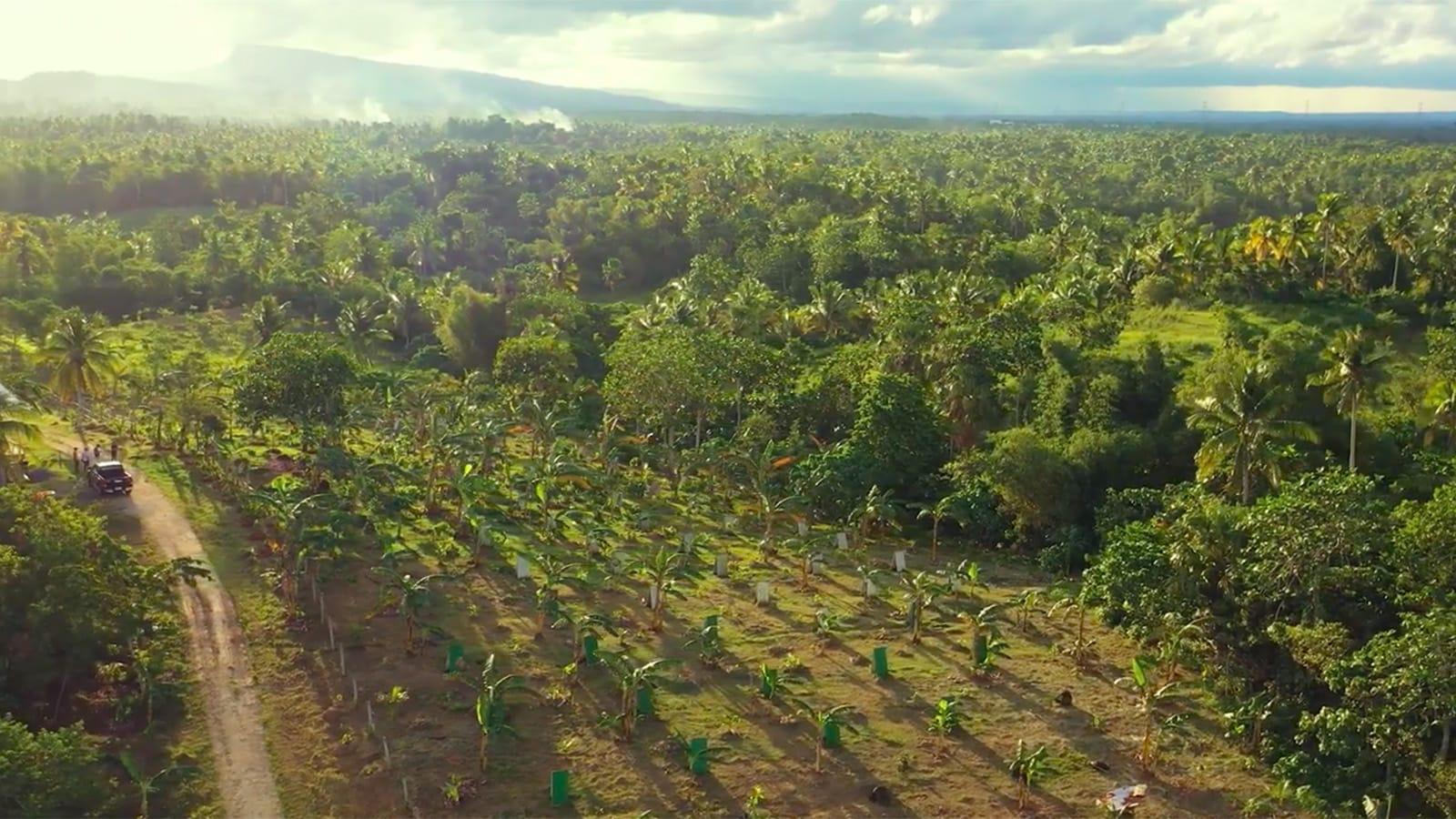 """شوكولاتة ساخنة في المناطق الاستوائية؟ إليكم القصة وراء مشروب """"سيكوات"""" اللذيذ في الفلبين"""
