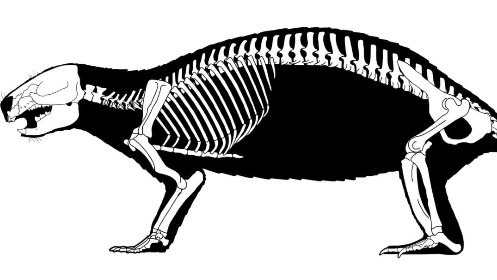 """عمرها 66 مليون عام.. اكتشاف حفريات تعود لـ""""وحش"""" غريب عاش بين الديناصورات في مدغشقر"""