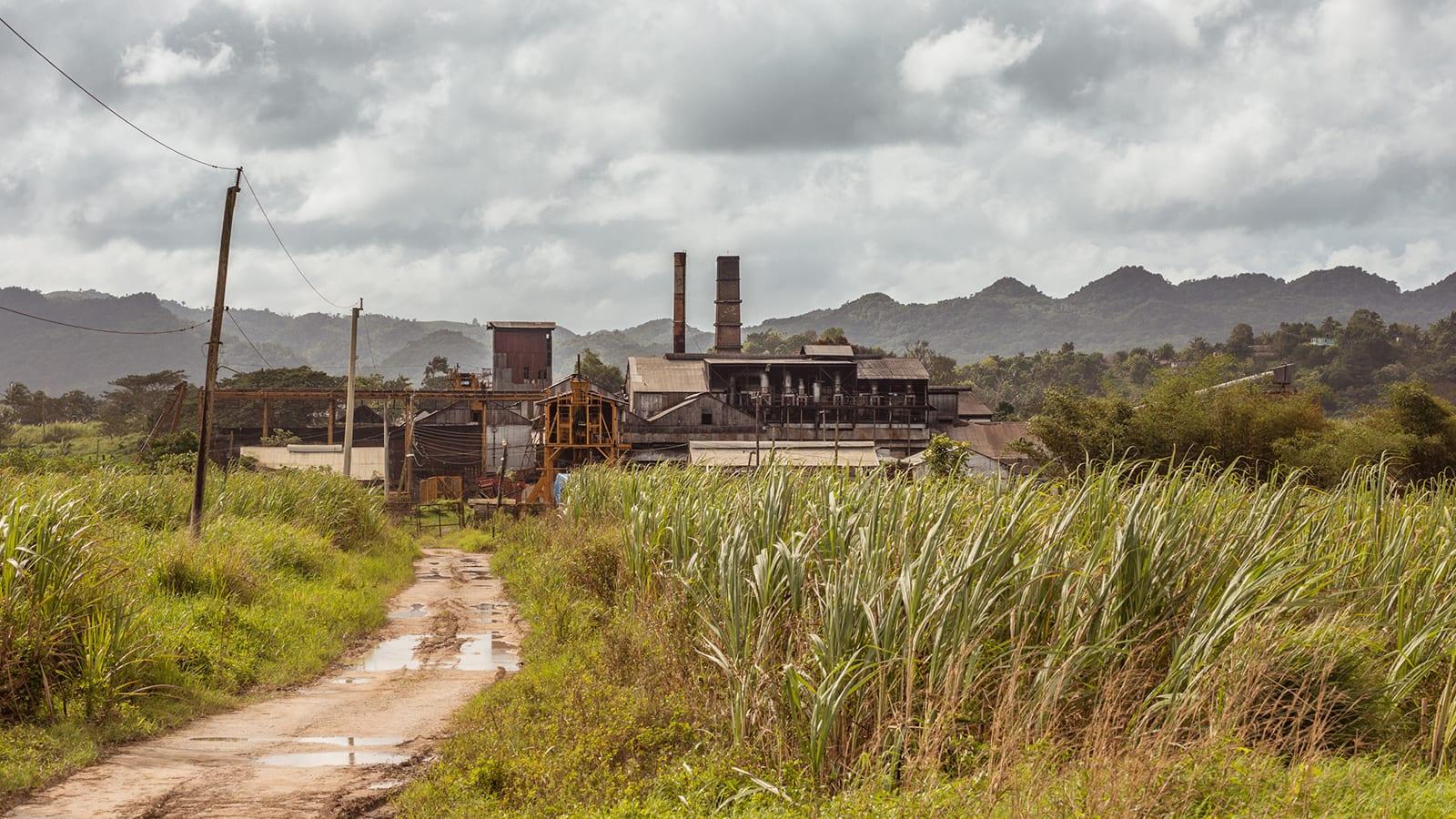 جاميكا