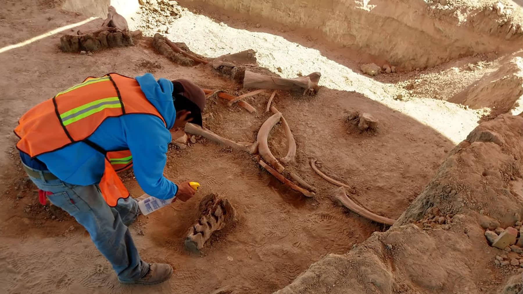في المكسيك..اكتشاف العشرات من عظام الماموث بموقع إنشاء مطار