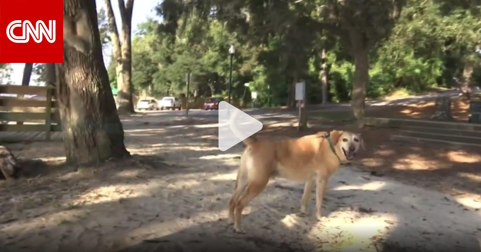 تمساح ضخم يقتل كلبا حاول حماية مالكه في مدينة أمريكية