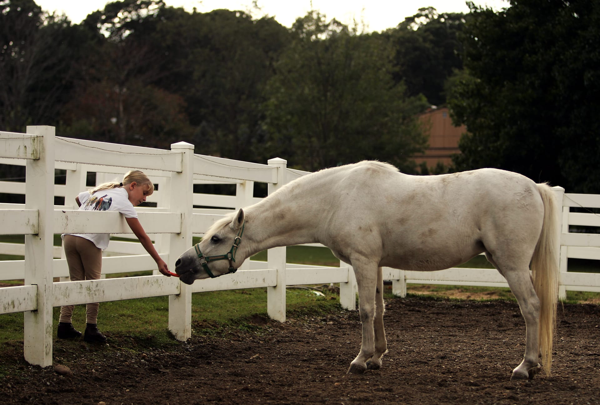 """نصائح غذائية لحمية حصان """"مثالية"""""""