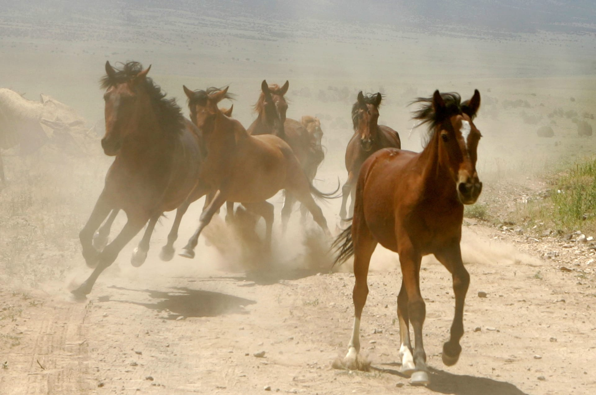 3 نصائح للسيطرة على خوف حصانك من الأجسام الغريبة