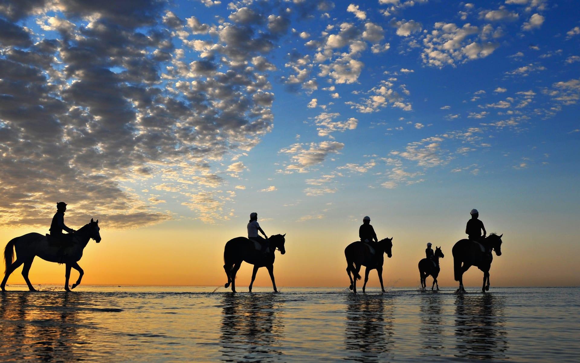 مدرب خيول يشاركنا أسرار تحضير الحصان لأغلى سباق خيول في العالم