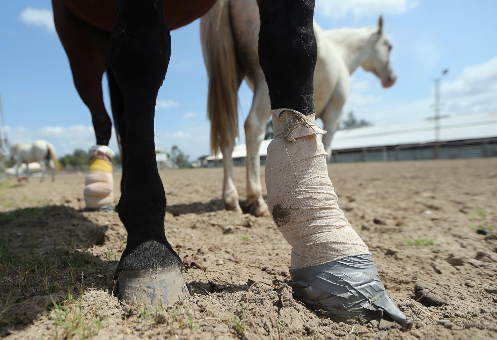 ما هي الطرق الصحيحة لعلاج إصابات الحصان بدون التسبب بمضاعفات إضافية؟