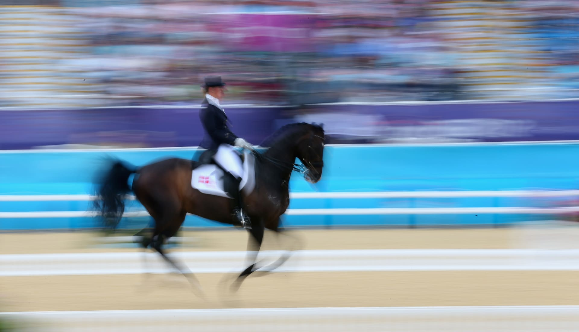 """هل تحب """"مراقصة"""" الخيول؟ إليك 5 قوانين لفعل ذلك بالأسلوب الصحيح"""