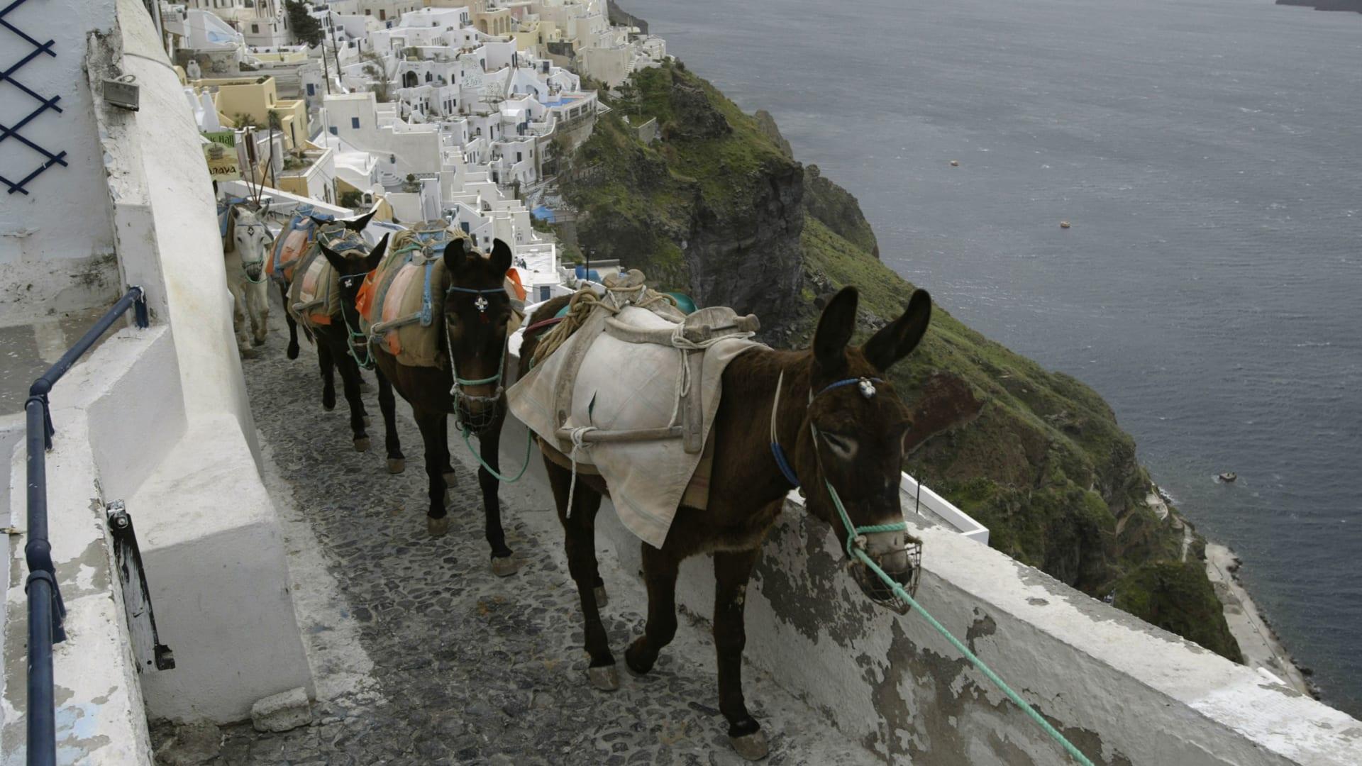 """بعد إصابات في العمود الفقري.. اليونان تحظر السياح ذو """"الوزن الزائد"""" من ركوب الحمير"""