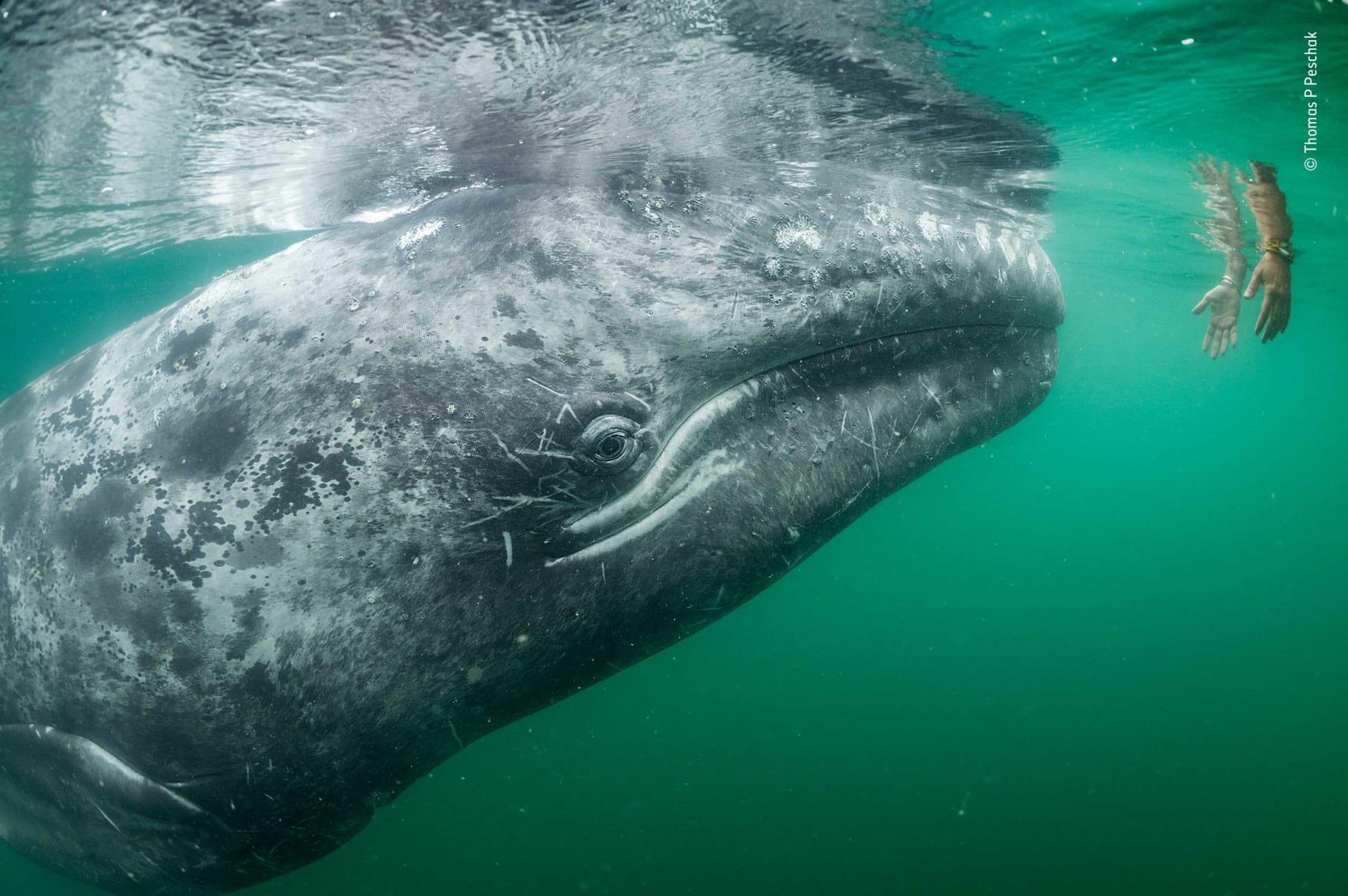 إليك بعض من أروع اللقطات من مسابقة مصور الحياة البرية لعام 2019