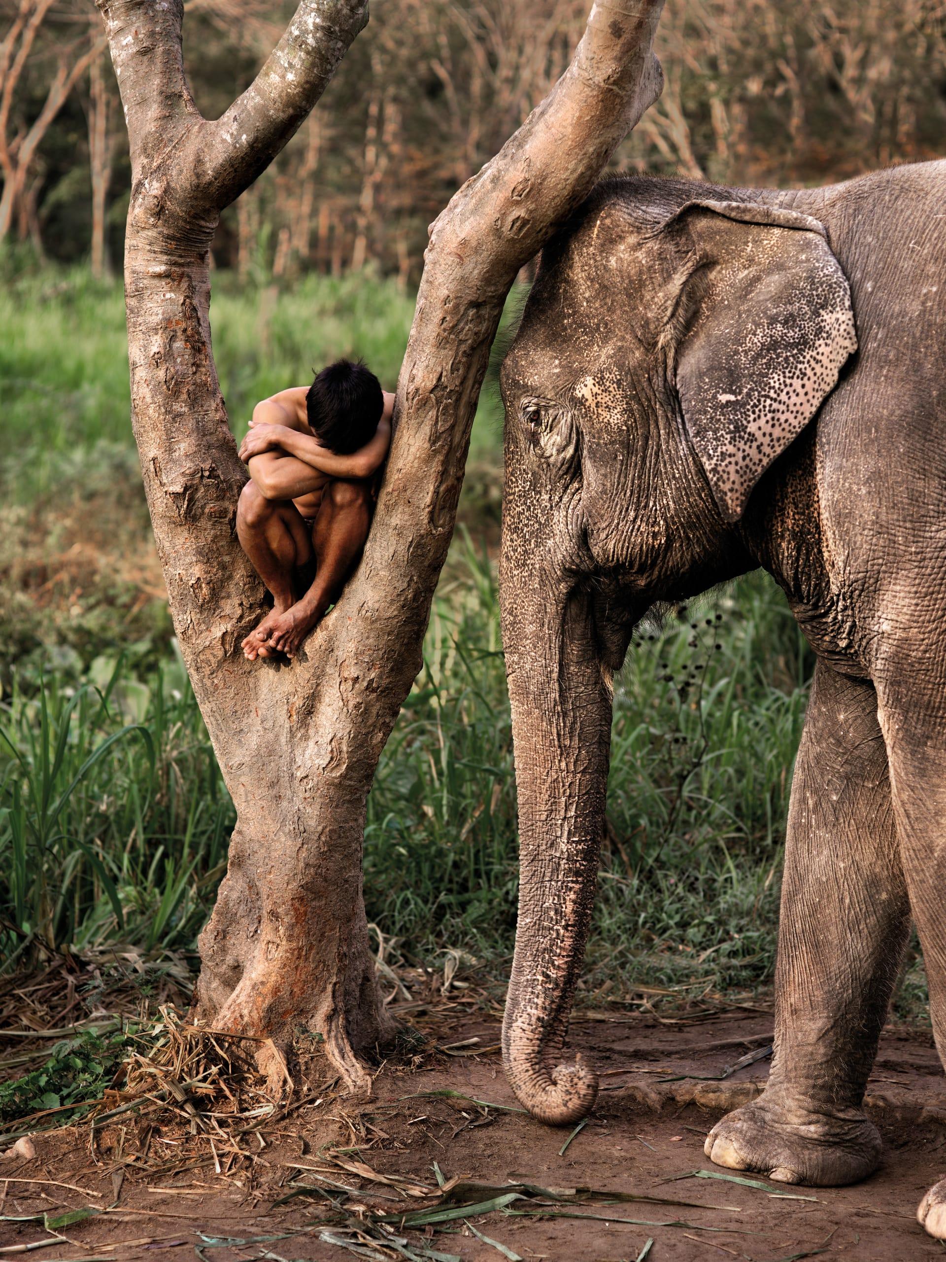 من الكويت إلى كمبوديا.. مصور يوثق العلاقة بين الإنسان والحيوان