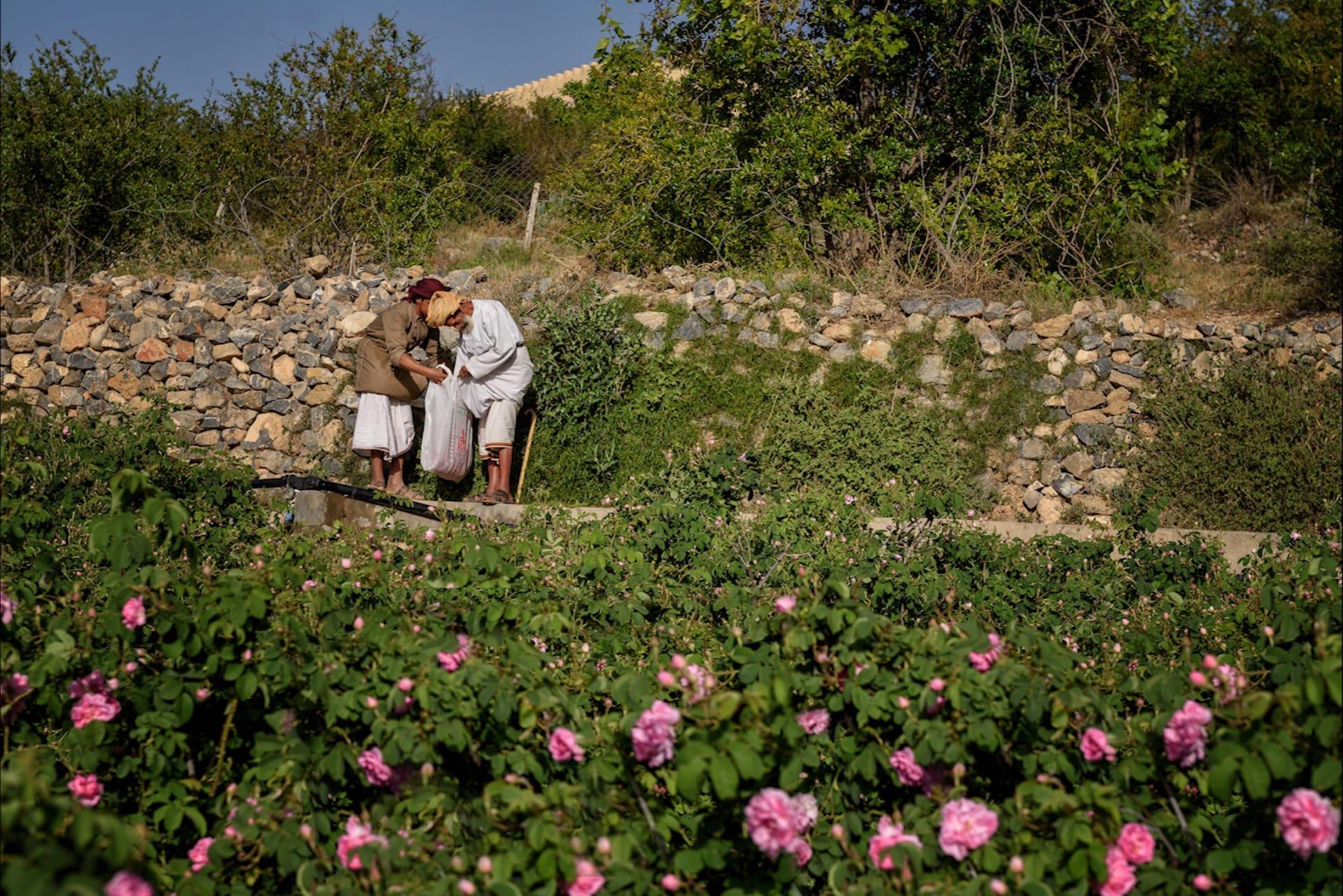 ما الأساليب العمانية التقليدية لصناعة ماء الورد الطبيعي؟