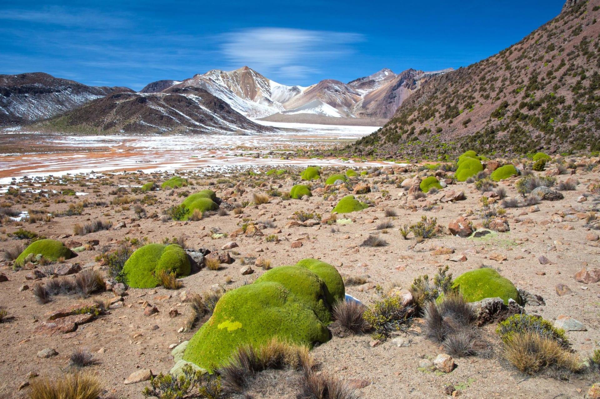 إليك أين يمكنك أن تجد أقدم الكائنات الحية في العالم