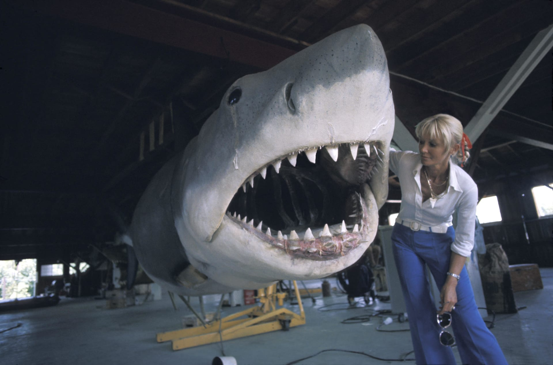 """فتاة """"سمك القرش"""".. هي تسبح معهم لتساعدهم، ولكن كيف؟"""
