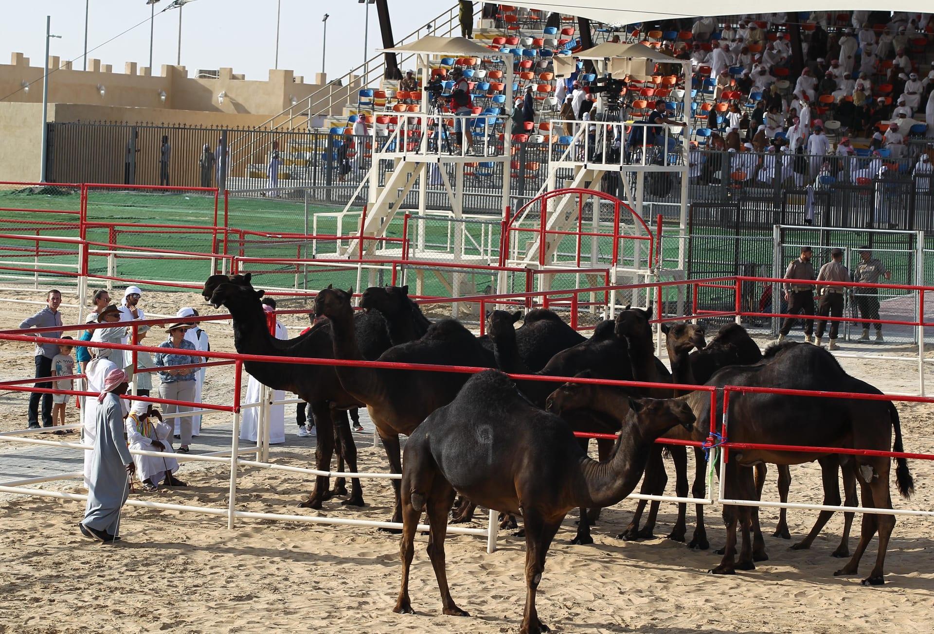 مهرجان الظفرة في أبوظبي