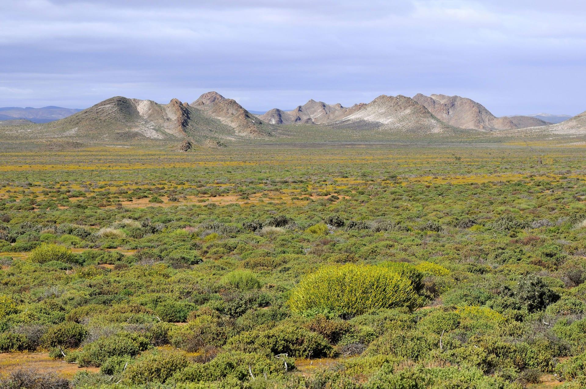 صحراء كارو في جنوب إفريقيا