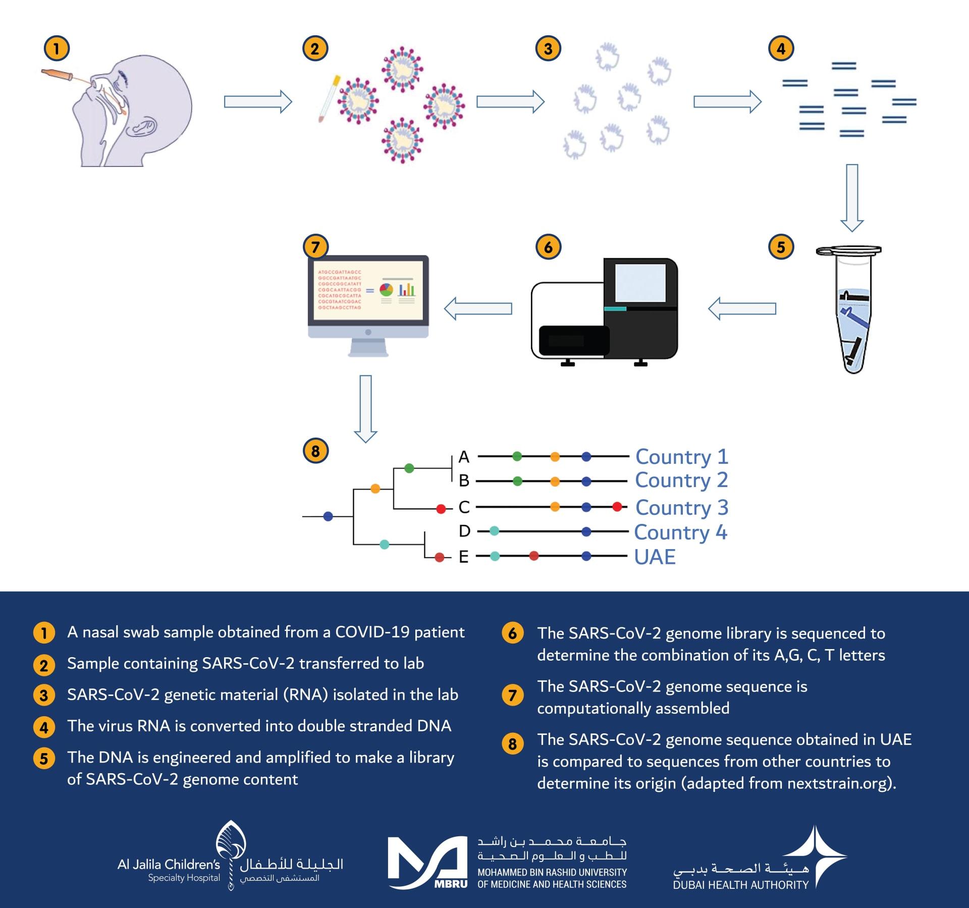 دراسة التسلسل الجيني لفيروس كورونا المستجد
