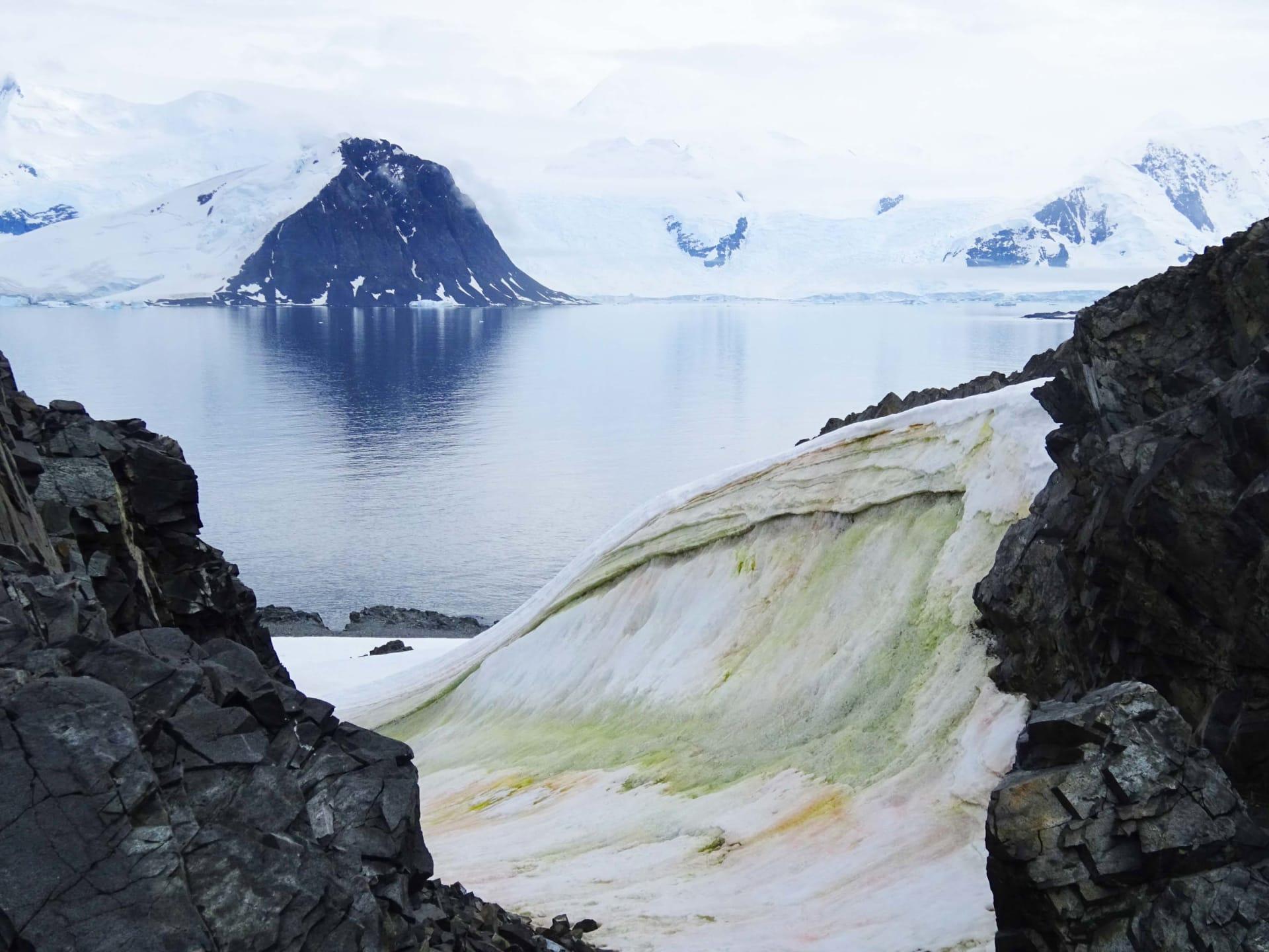 الثلج يتحول إلى اللون الأخضر في القارة القطبية الجنوبية وسيجعل تغير المناخ الأمر أسوأ