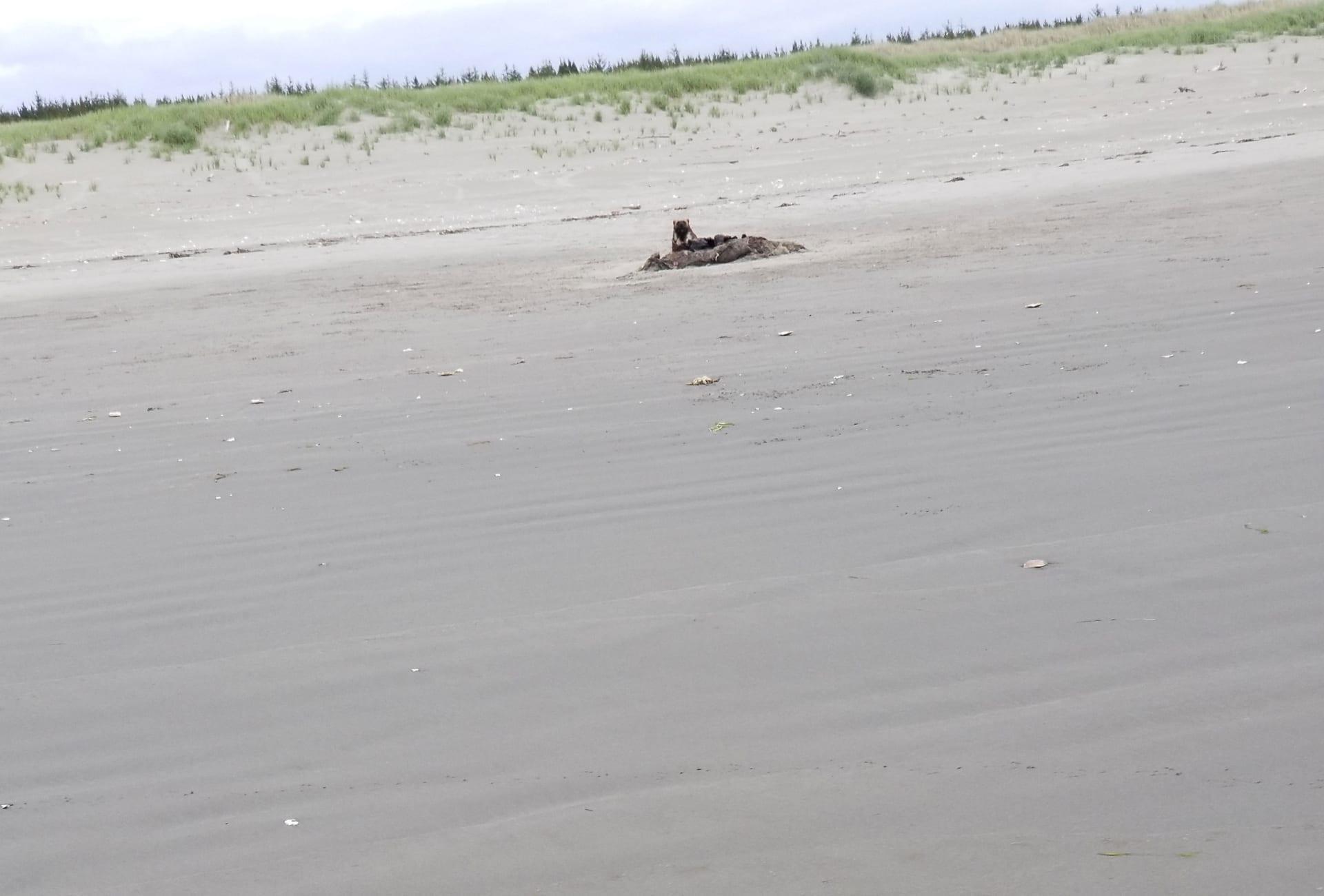 مشاهدة نادرة.. لم يصدق أحد هذه الامرأة عندما قالت إنها رأت هذا الحيوان بشاطئ بأمريكا