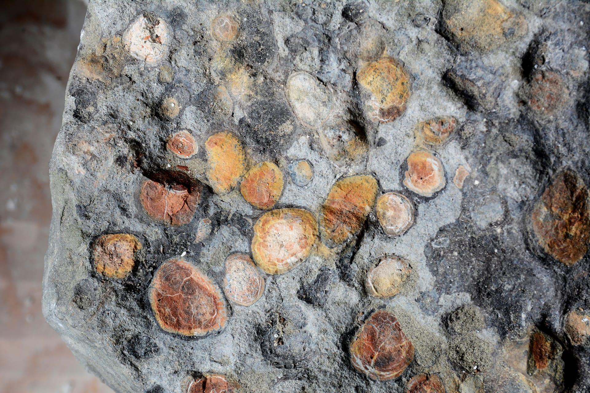 ما كانت وجبته الأخيرة؟ الكشف عن محتويات معدة ديناصور عمره 110 مليون عام