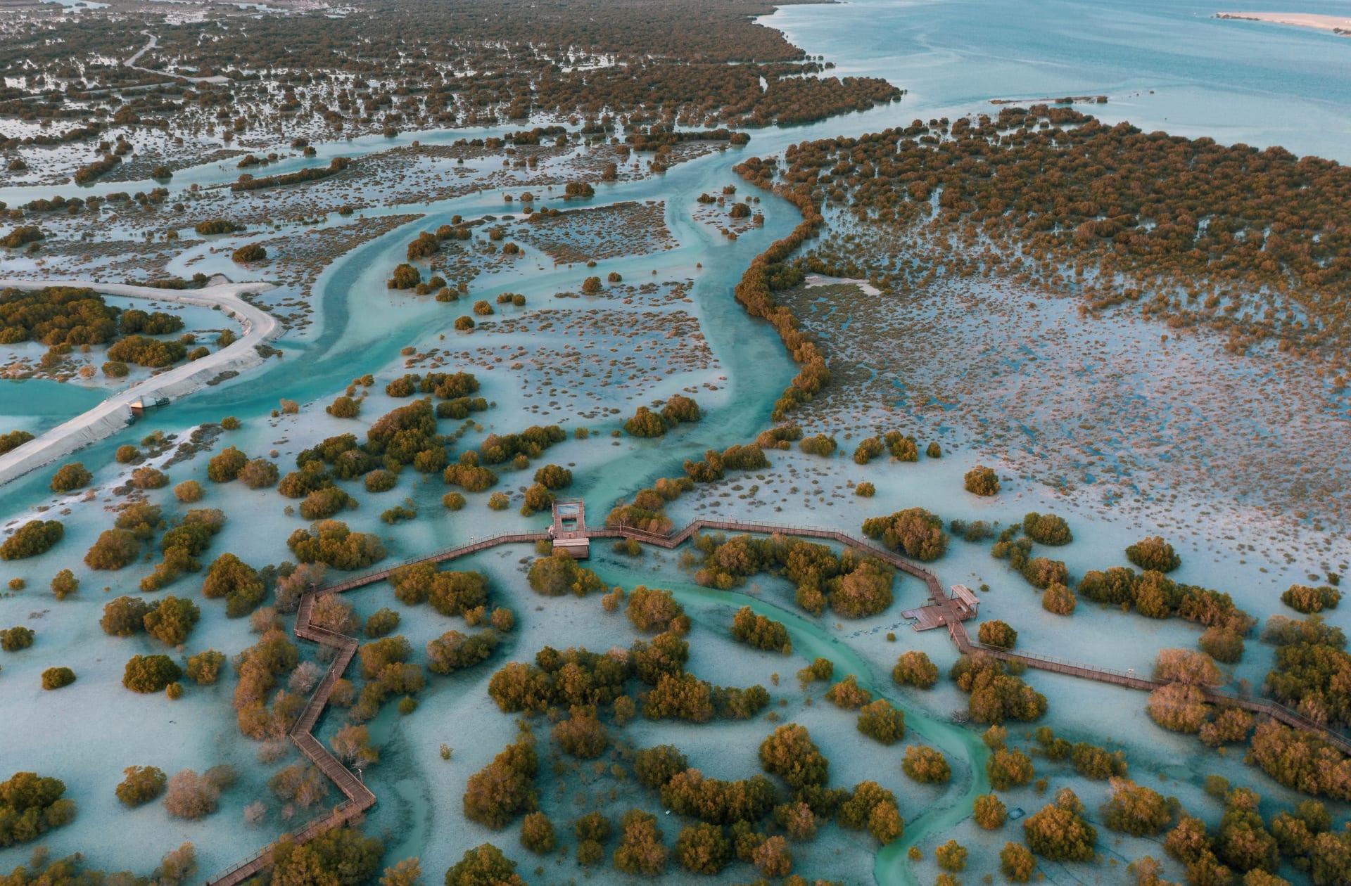 حديقة القرم في جزيرة الجبيل في أبوظبي
