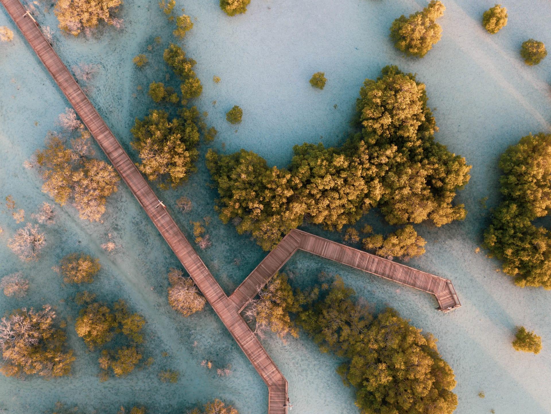 ممشى القرم بجزيرة الجبيل في أبوظبي