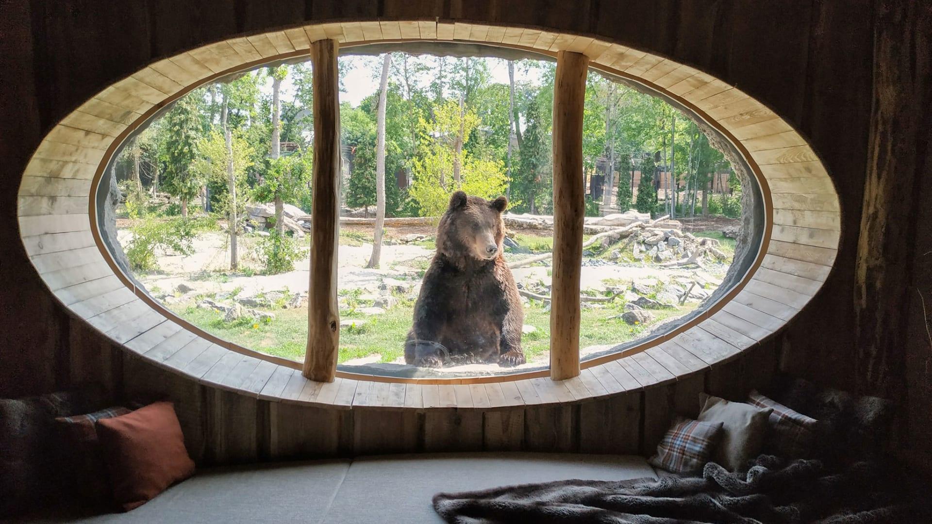 ترغب بغرفة بإطلالة مميزة؟ يوفر هذا المنتجع غرف تطل على حديقة حيوانات
