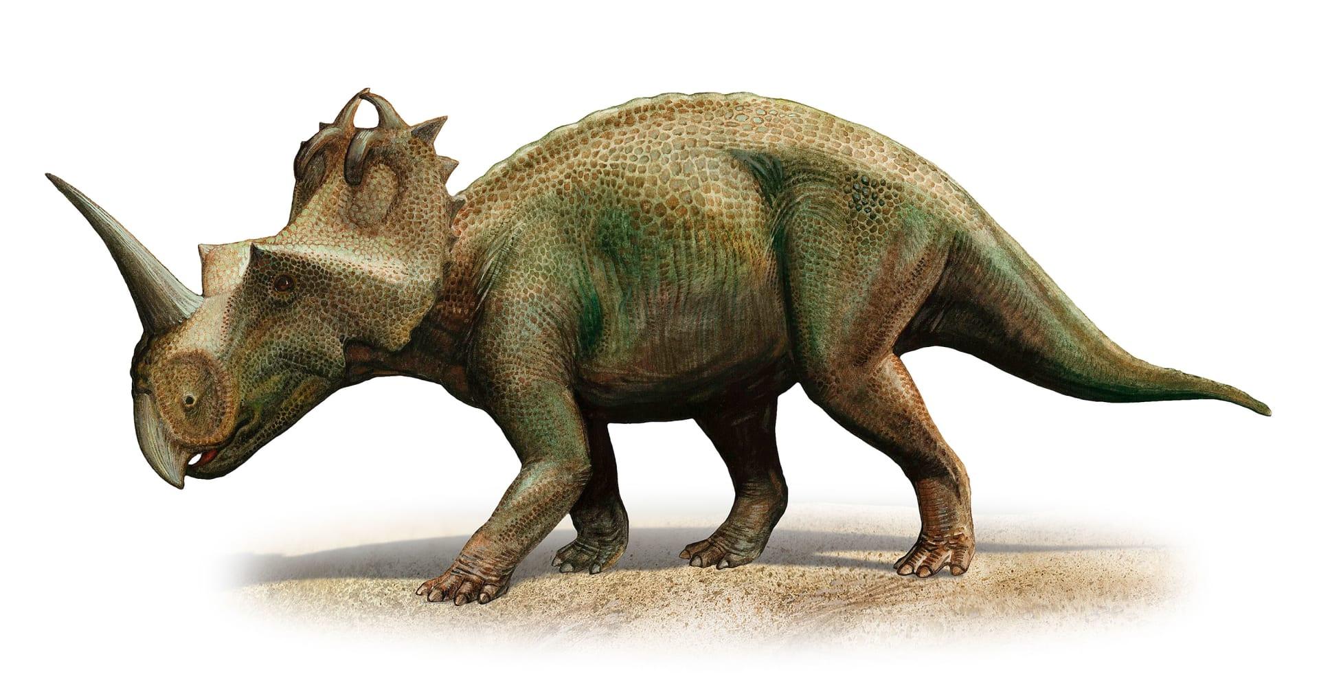 لأول مرة.. تشخيص ديناصور بسرطان يؤثر في البشر الآن