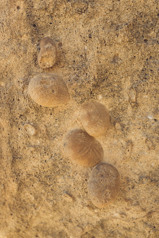 ستشعر وكأنك تمشي على حلوى الخطمي.. إليك ما يمكنك فعله في حديقة الصخور في عمان