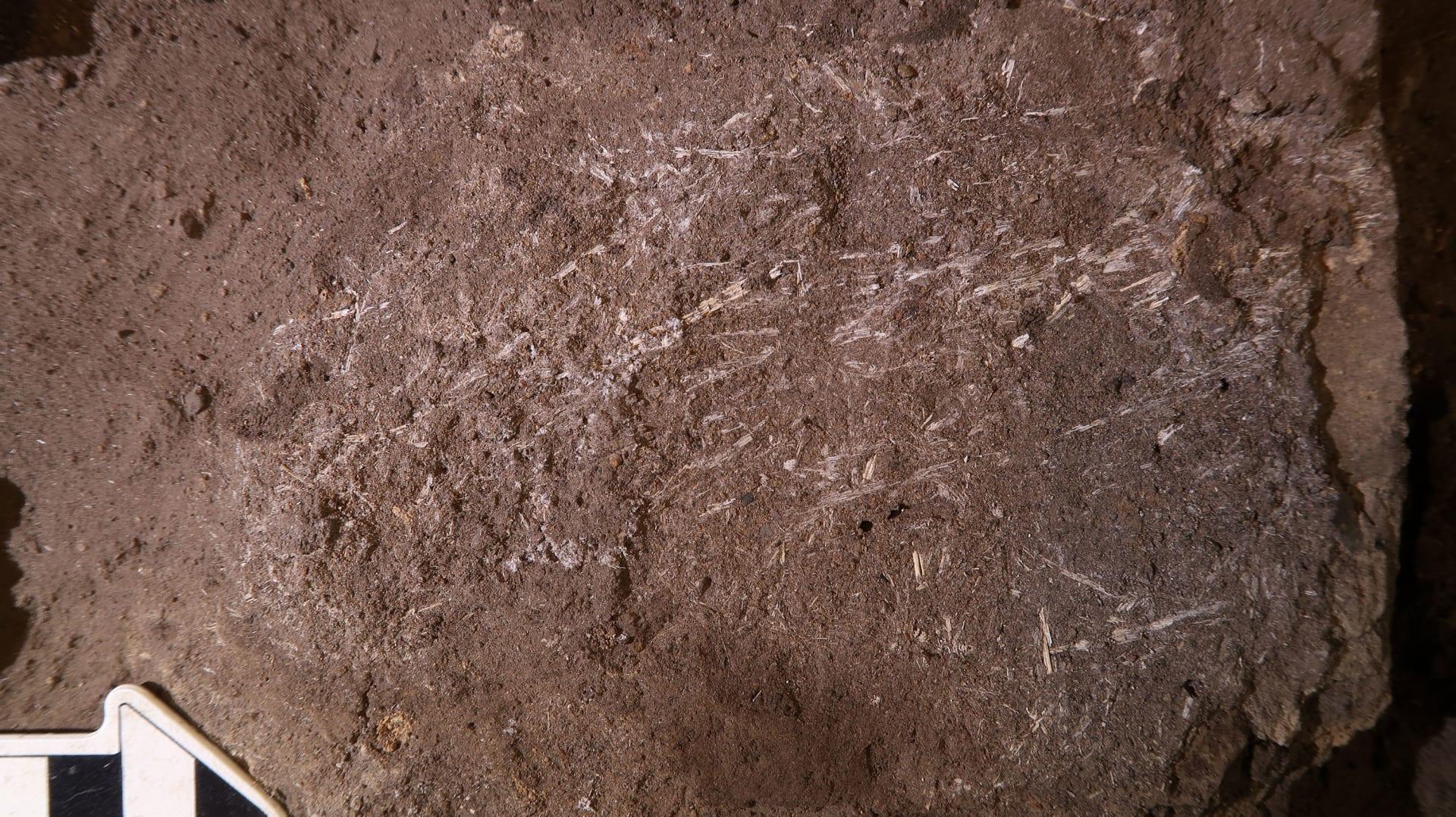 كهف يكشف أن البشر الأوائل كانوا يعلمون كيفية صنع أسرة مريحة وخالية من الحشرات