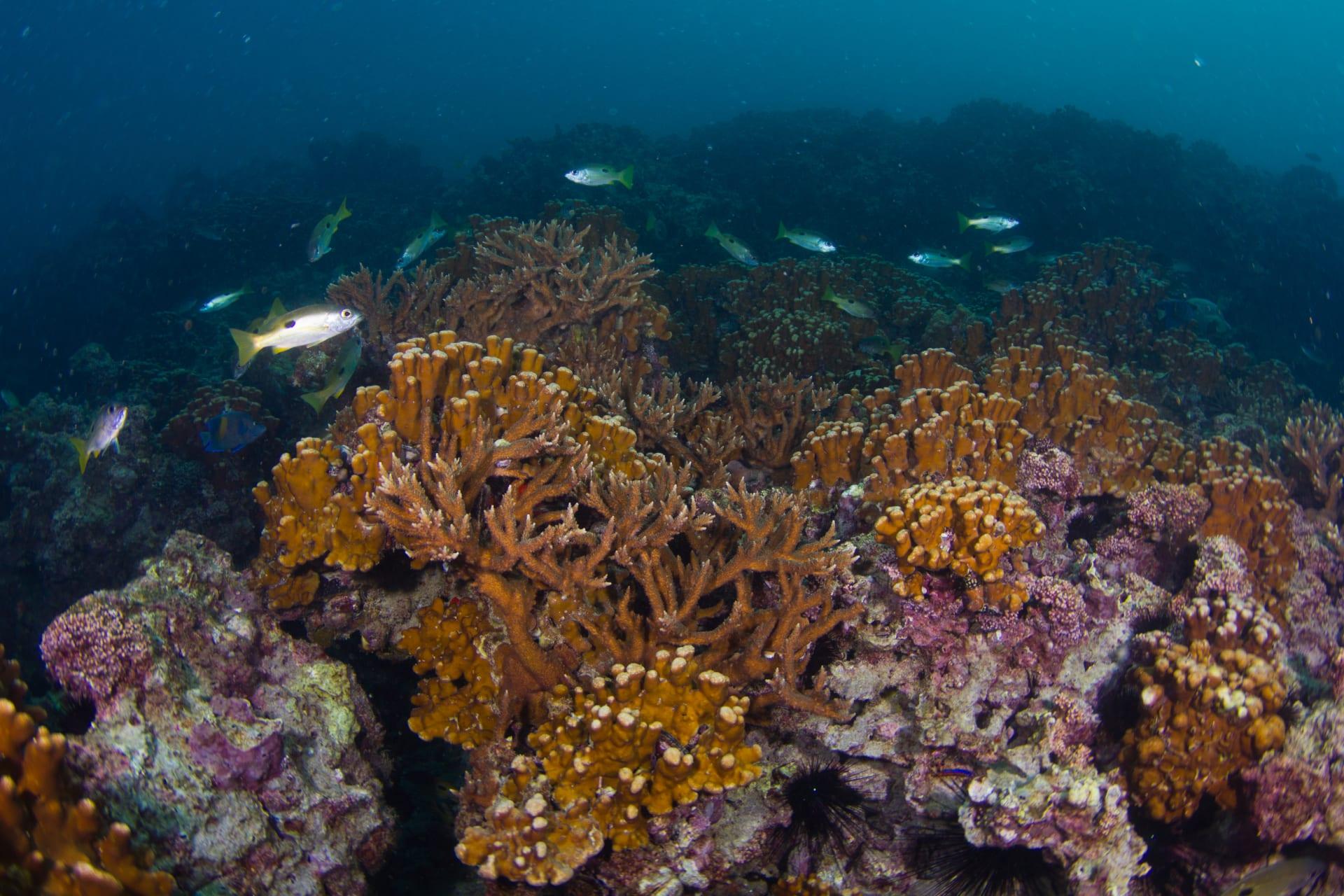 """منها """"غزو"""" طيور الغاق السقطري لساحل الظفرة..إماراتي يبرز تنوع الحياة البحرية بجزر أبوظبي"""