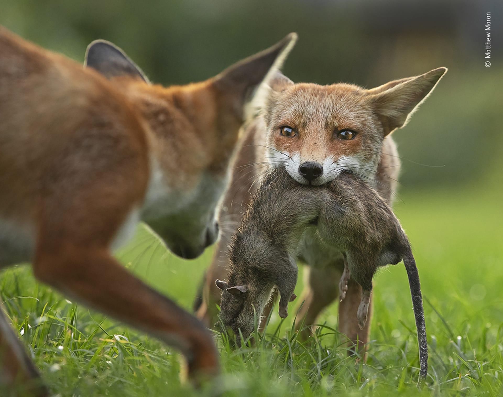 الكشف عن الصور الأولى من مسابقة مصور الحياة البرية لعام 2020