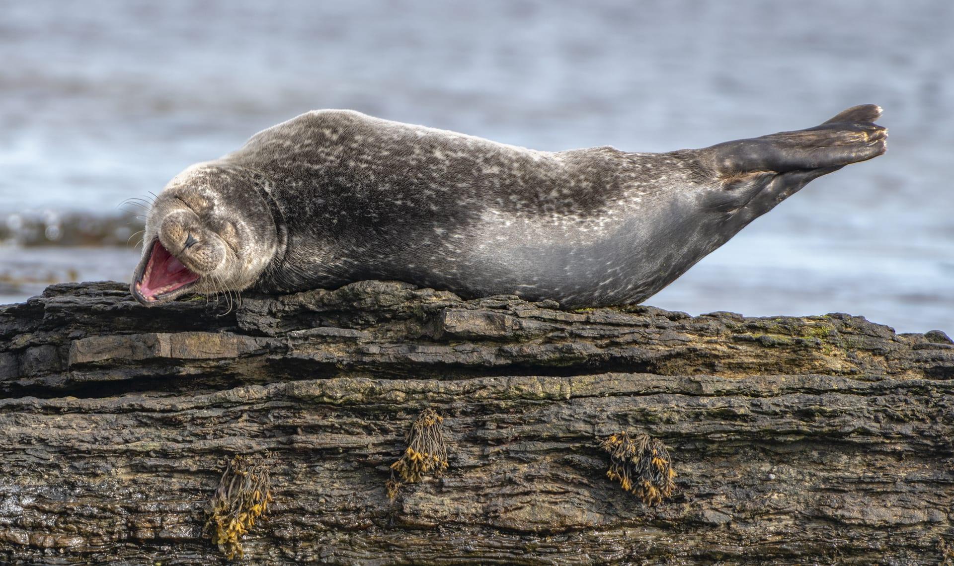 من سمكة مبتسمة إلى راكون معلق.. جائزة كوميديا الحياة البرية للتصوير الفوتوغرافي تأمل رسم البسمة بظل جائحة فيروس كورونا