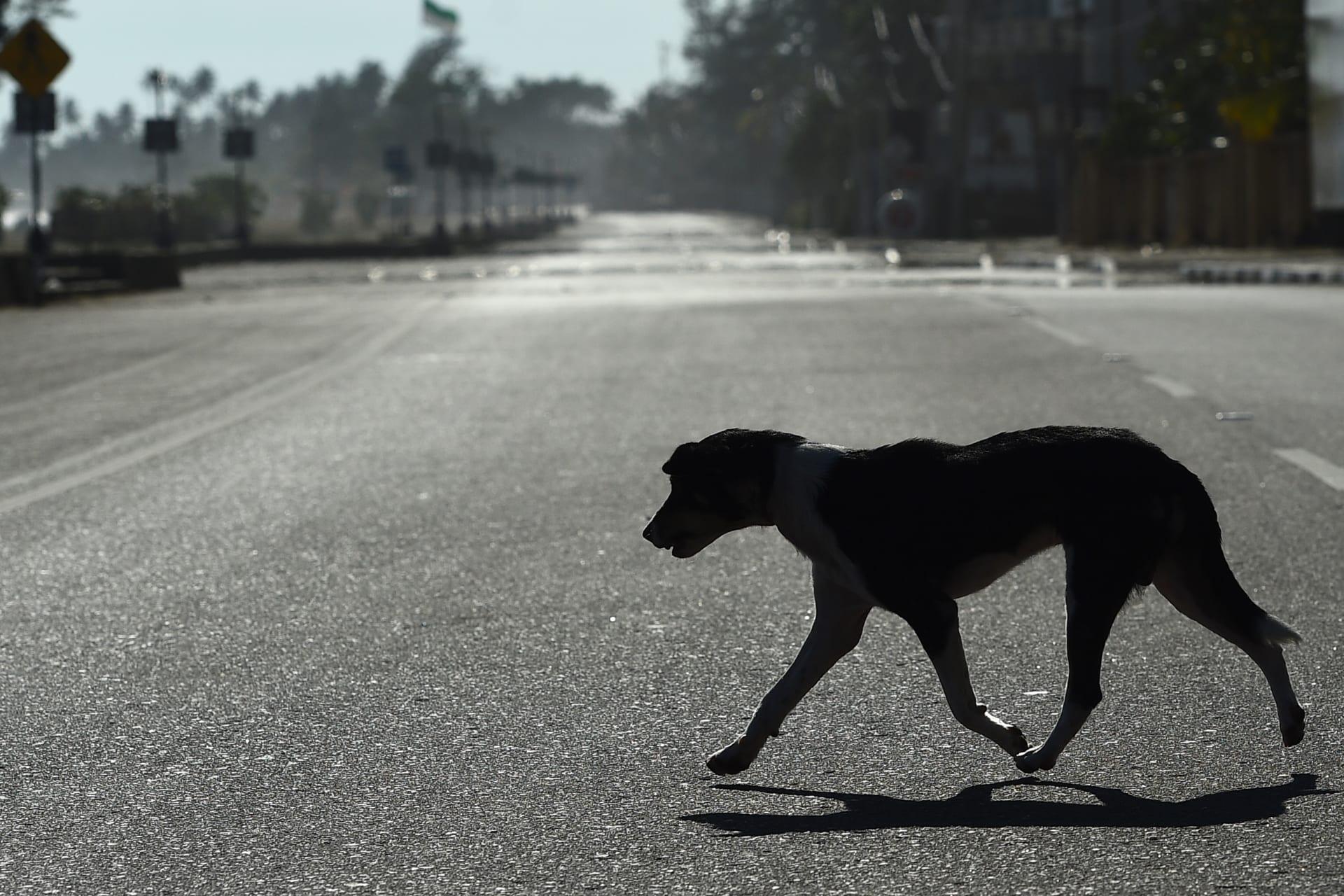 """مسؤول """"أوبئة إربد"""" بالأردن: لا مخاوف من إصابة الكلب بفيروس كورونا"""