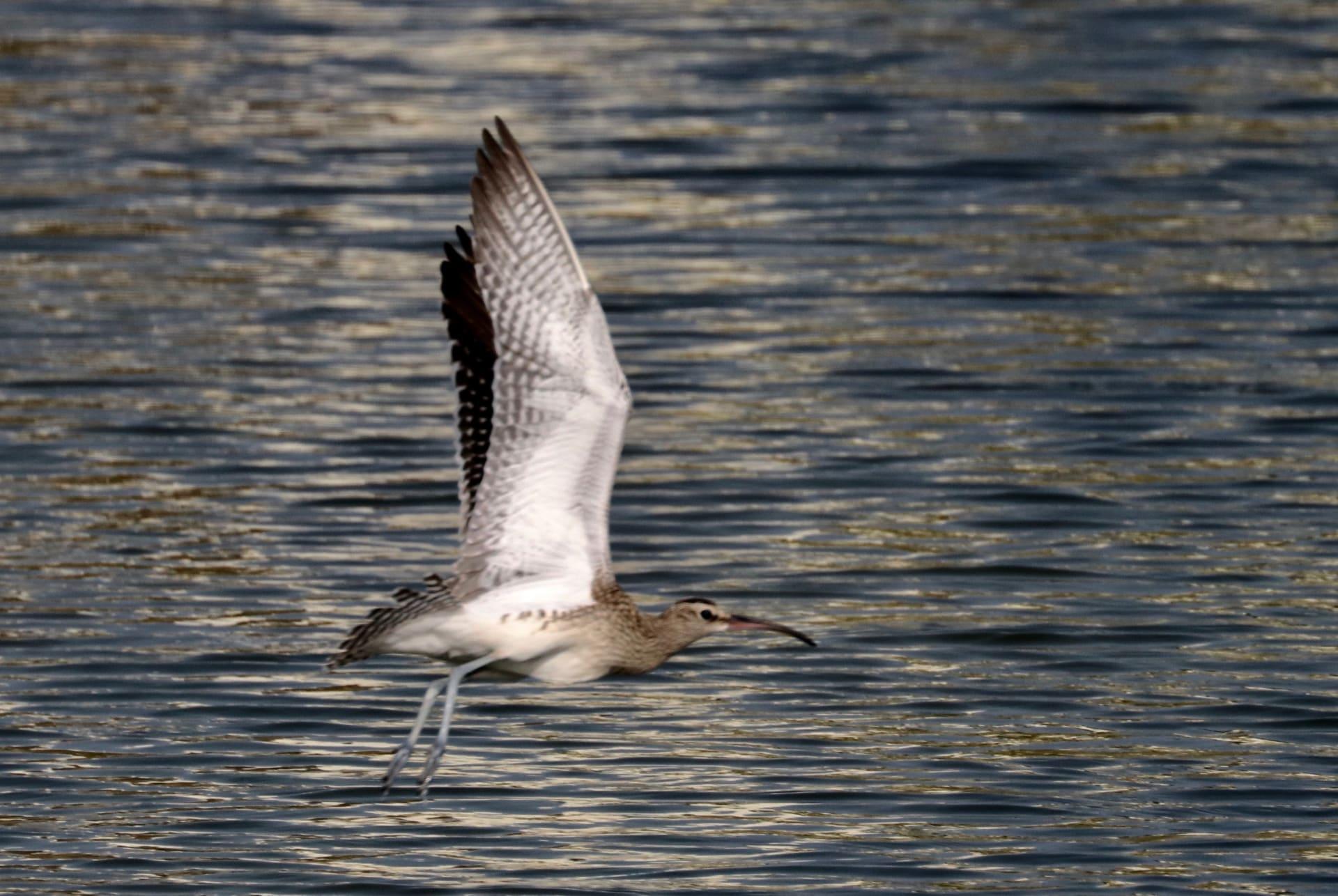 يتواجد منه 100 فقط حول العالم.. توثيق طائر نادر في أبوظبي