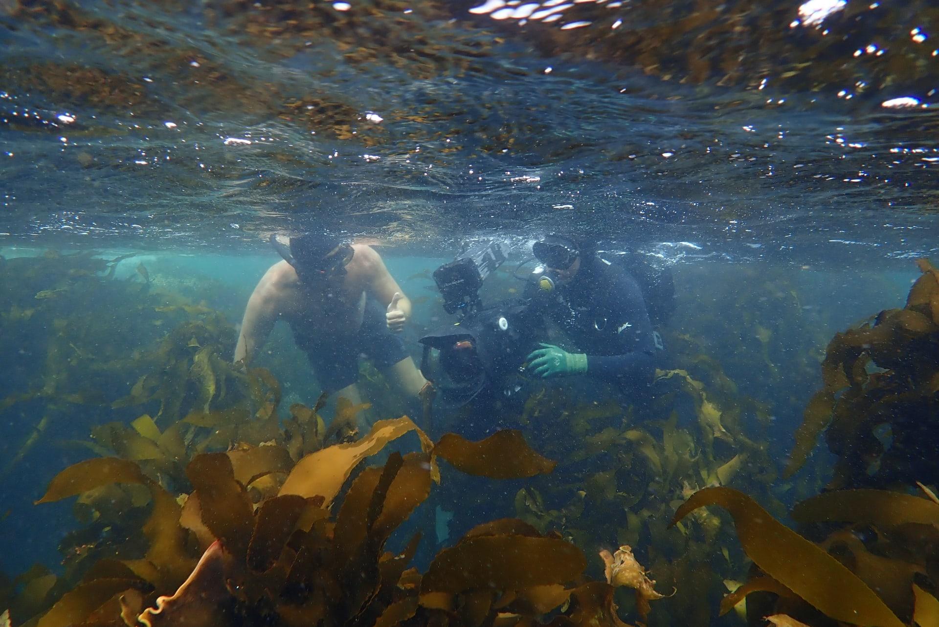 علاقة فريدة تجمع بين غواص وأخطبوط في المحيط الأطلسي بجنوب أفريقيا.. ما سرها؟