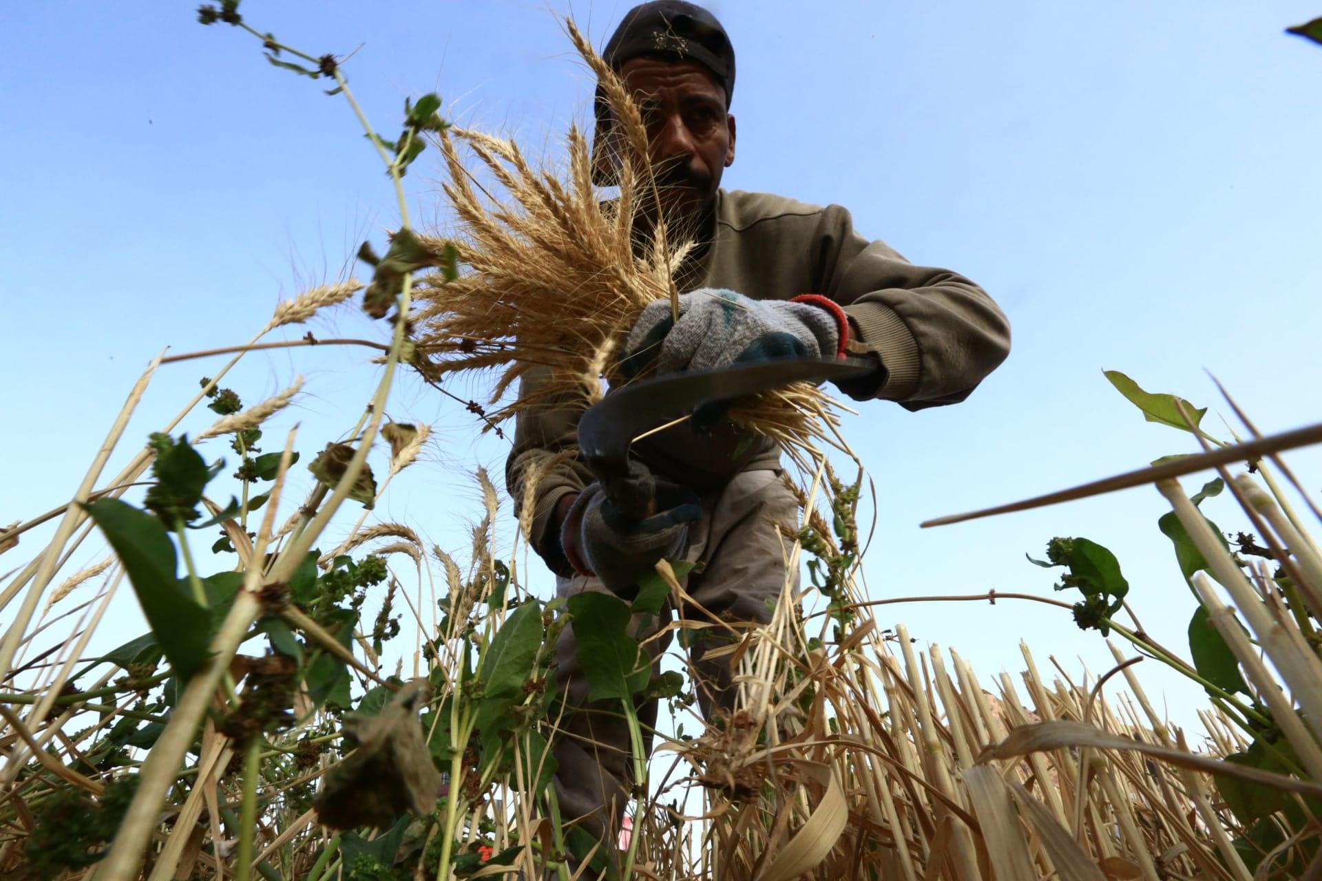 80% من الغذاء مستورد خليجيا.. هل تنجح تكنولوجيا الزراعة في تقليل الفجوة؟