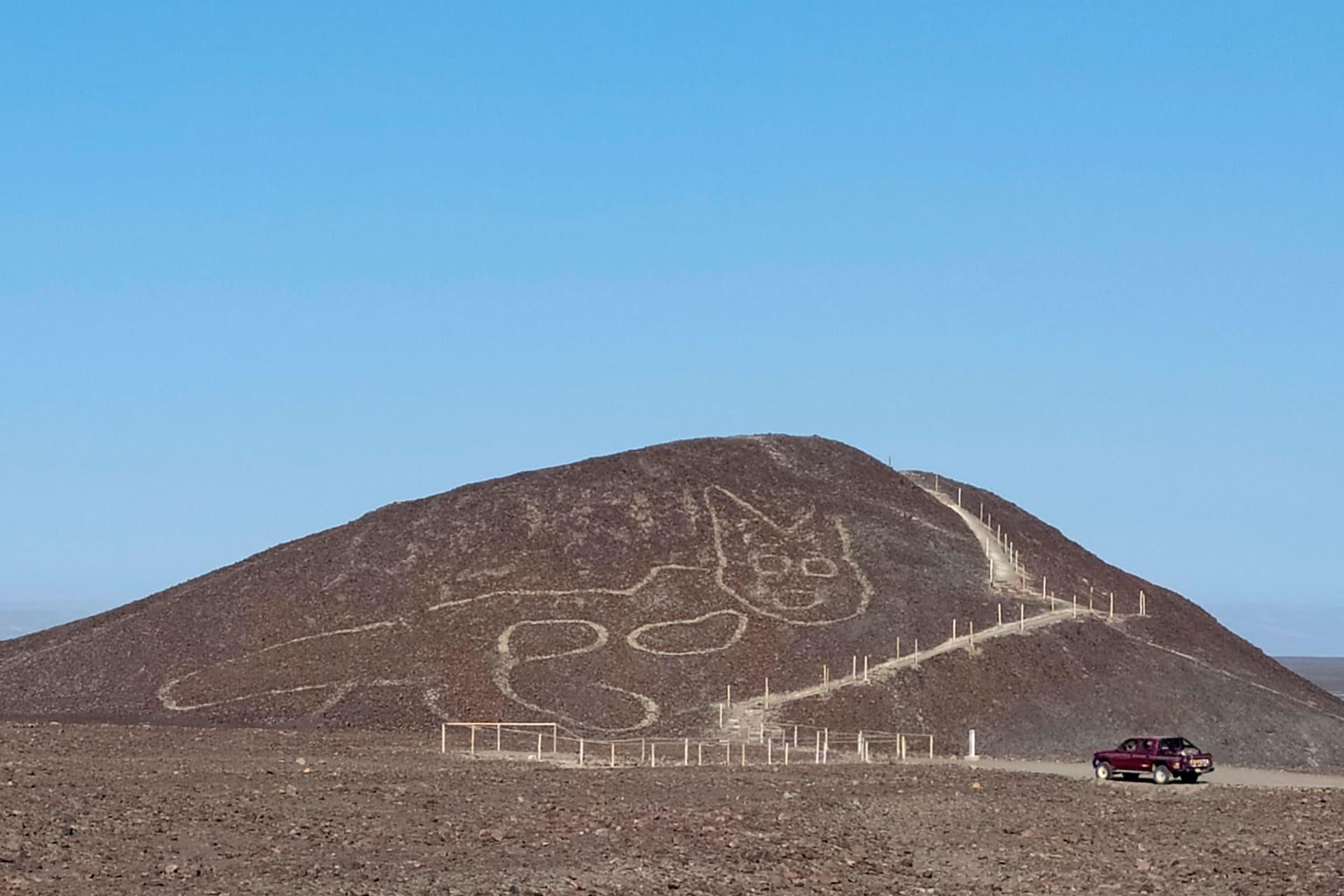 بين خطوط نازكا الغامضة في بيرو.. اكتشاف رسمة لقطة عملاقة نقشت قبل ألفين عام