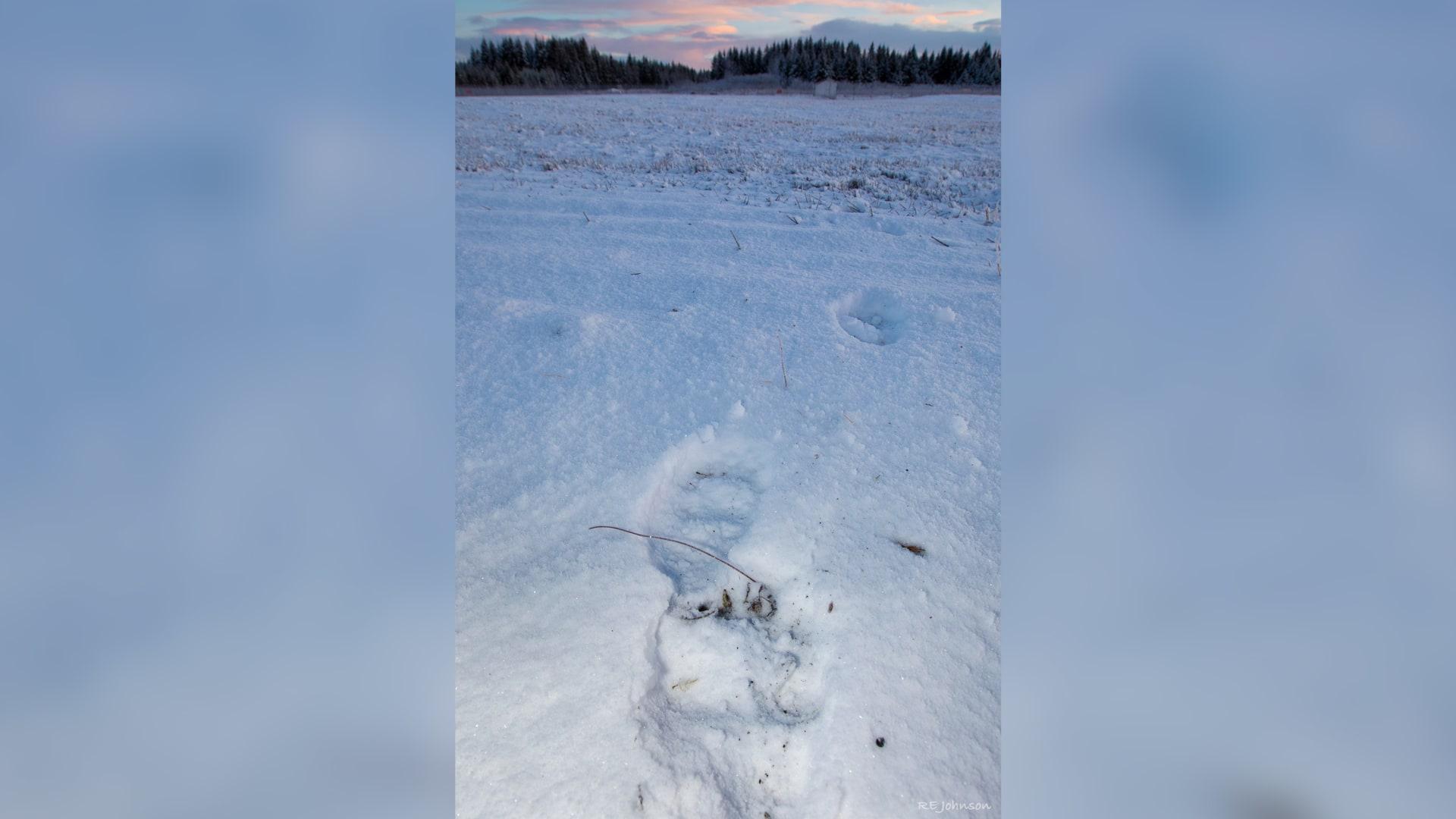حادث غير متوقع.. طائرة ركاب تصدم دباً على المدرج أثناء الهبوط في ألاسكا