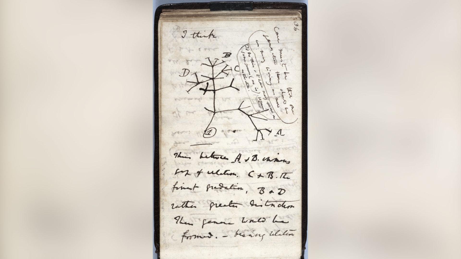 مفقودة أم مسروقة؟ الغموض يحيط بمجموعة قيمة من دفاتر العالم تشارلز داروين