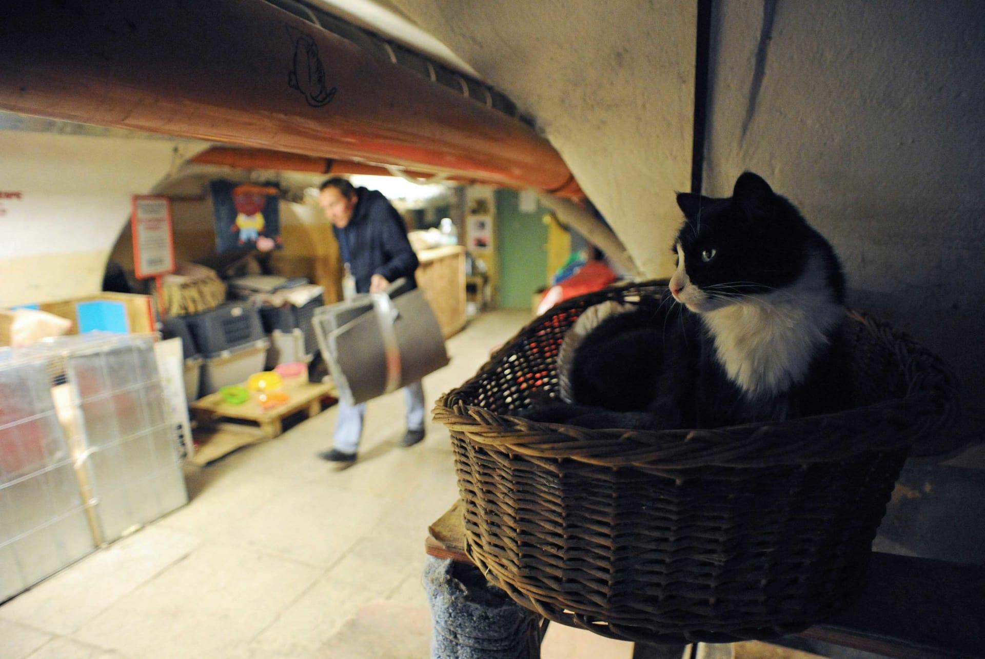 كجزء من وصيته.. رجل فرنسي يترك مبلغا سخيا لقطط تعيش بقبو متحف في روسيا