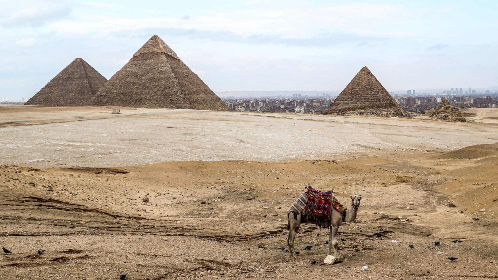مفقودة من 70 عام.. العثور بقايا عمرها 5 آلاف عام من الهرم الأكبر بمصر في صندوق سيجار في اسكتلندا
