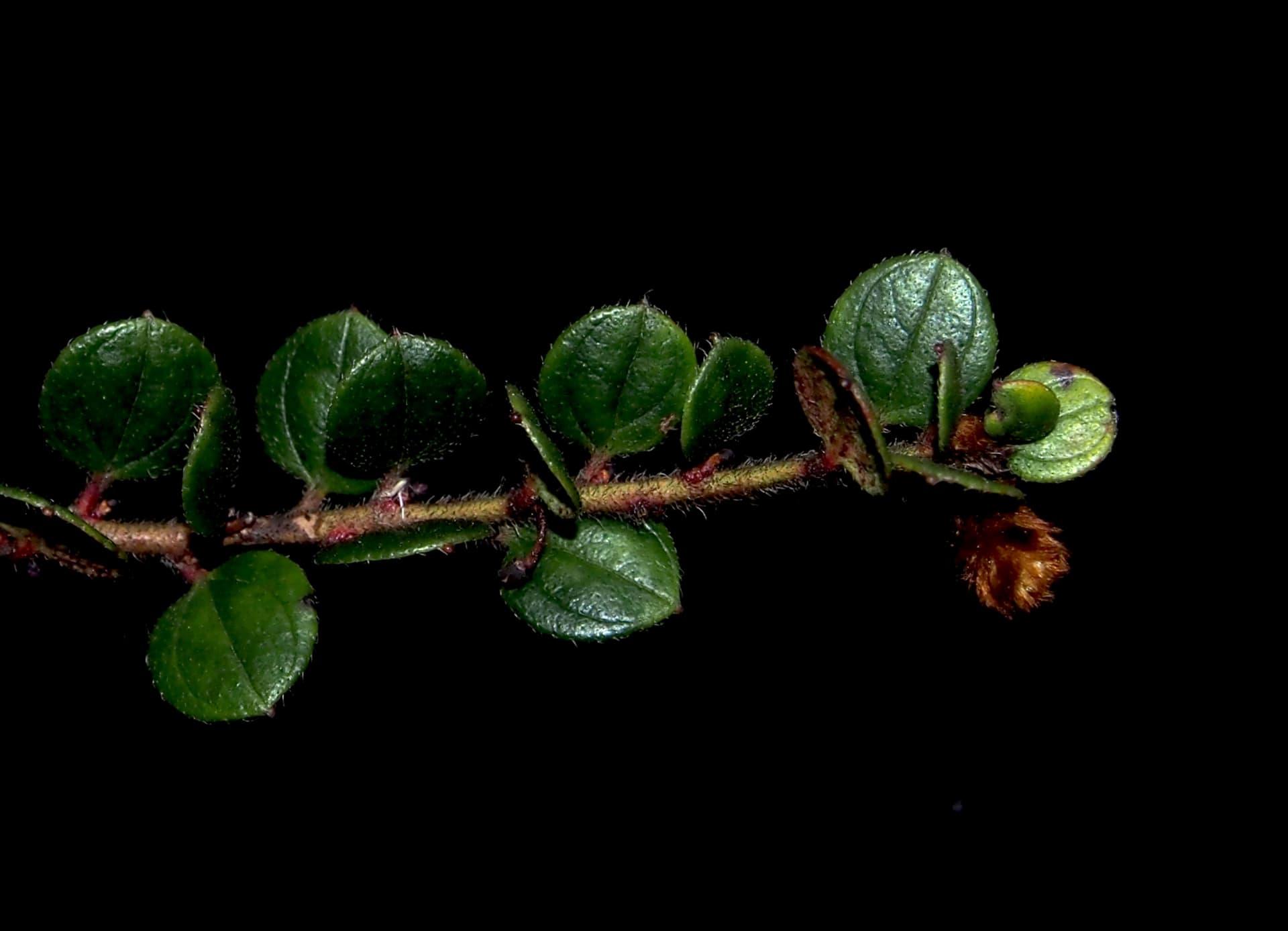 """اعتقدوا أن رائحتها ستكون كاللحم الفاسد.. علماء يصفون نبتة الأوركيد هذه بأنها """"الأقبح"""" بالعالم"""