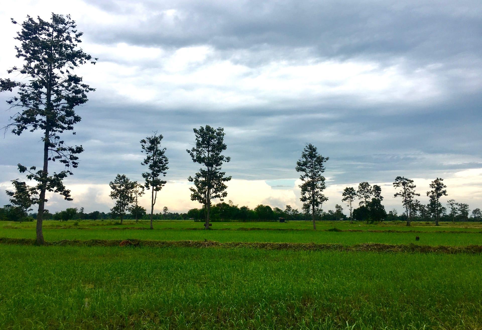 الطريق إلى يسان.. البحث عن الحياة الطبيعية في شمال شرق تايلاند