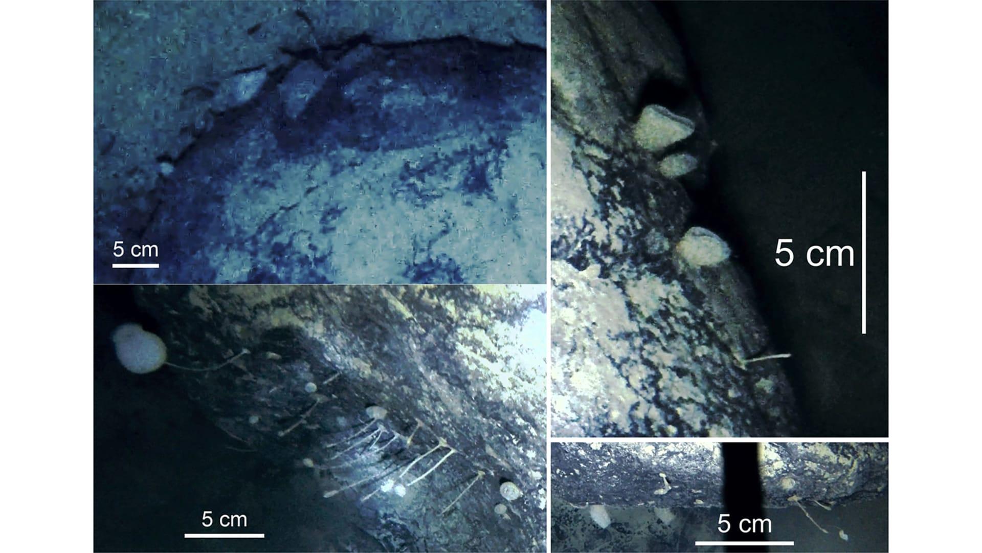 قد تعيش لأعوام دون طعام.. علماء يعثرون على مخلوقات أصابتهم بالحيرة بأعماق القطب الجنوبي بالصدفة
