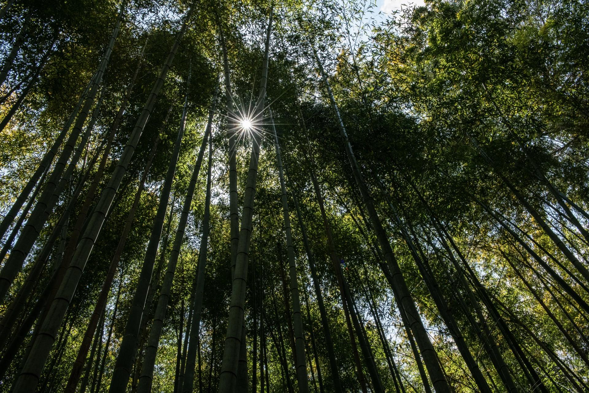 قد يقلل من فاتورة الطاقة الخاصة بك.. هذا ما يجعل الخشب الشفاف أفضل من الزجاج