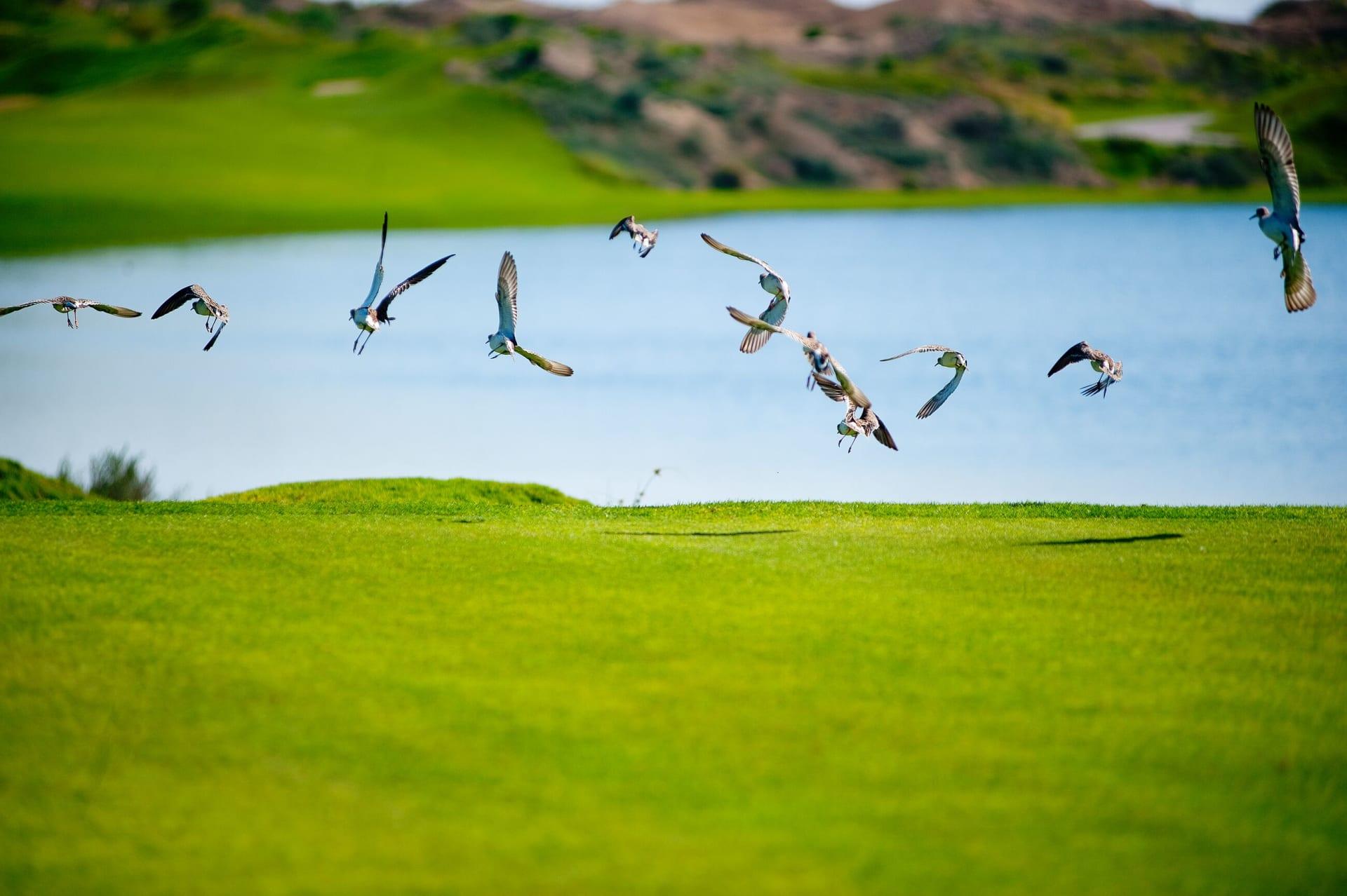 ملعب الموج للغولف في سلطنة عمان